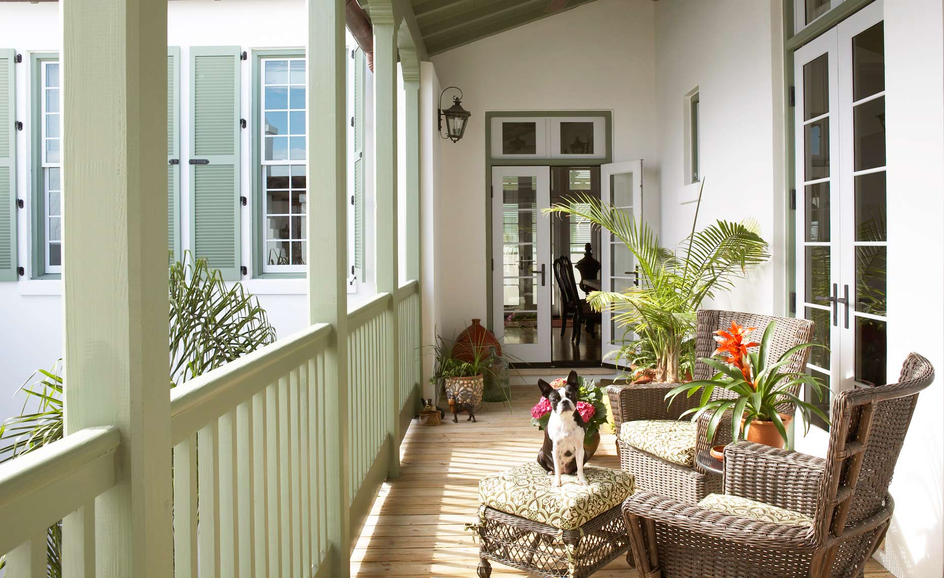 BostonTerrierPorch1.jpg