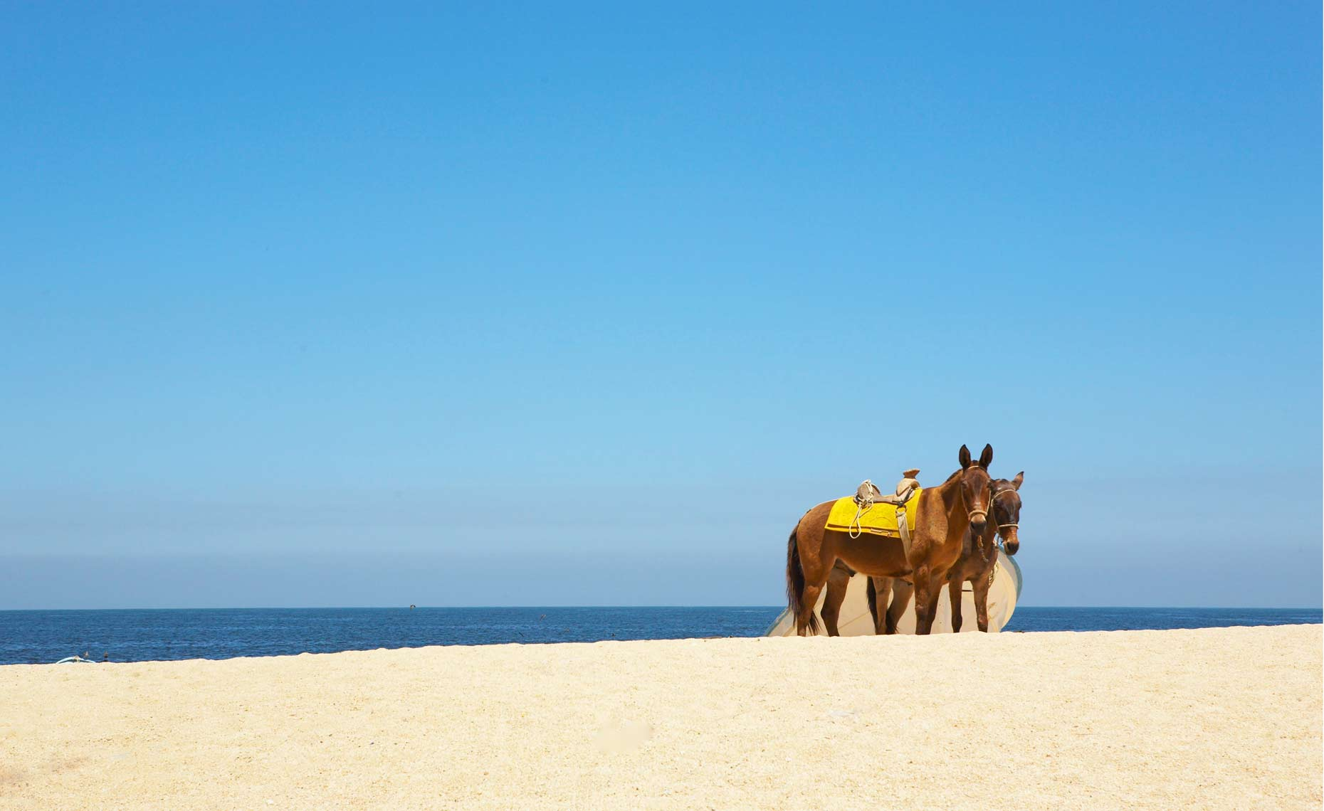 HorsesonBeach1.jpg